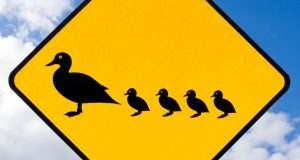 Road sign warning to watch out for ducks and ducklings crossing the road on cloudy blue sky background